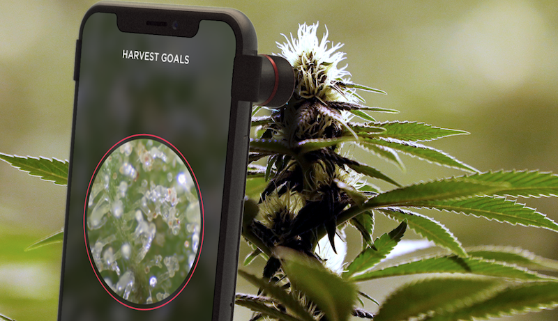 Best Smart Grow Apps for Growing Cannabis in 2019