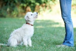 Dog Training 101: How To Train Your New Puppy