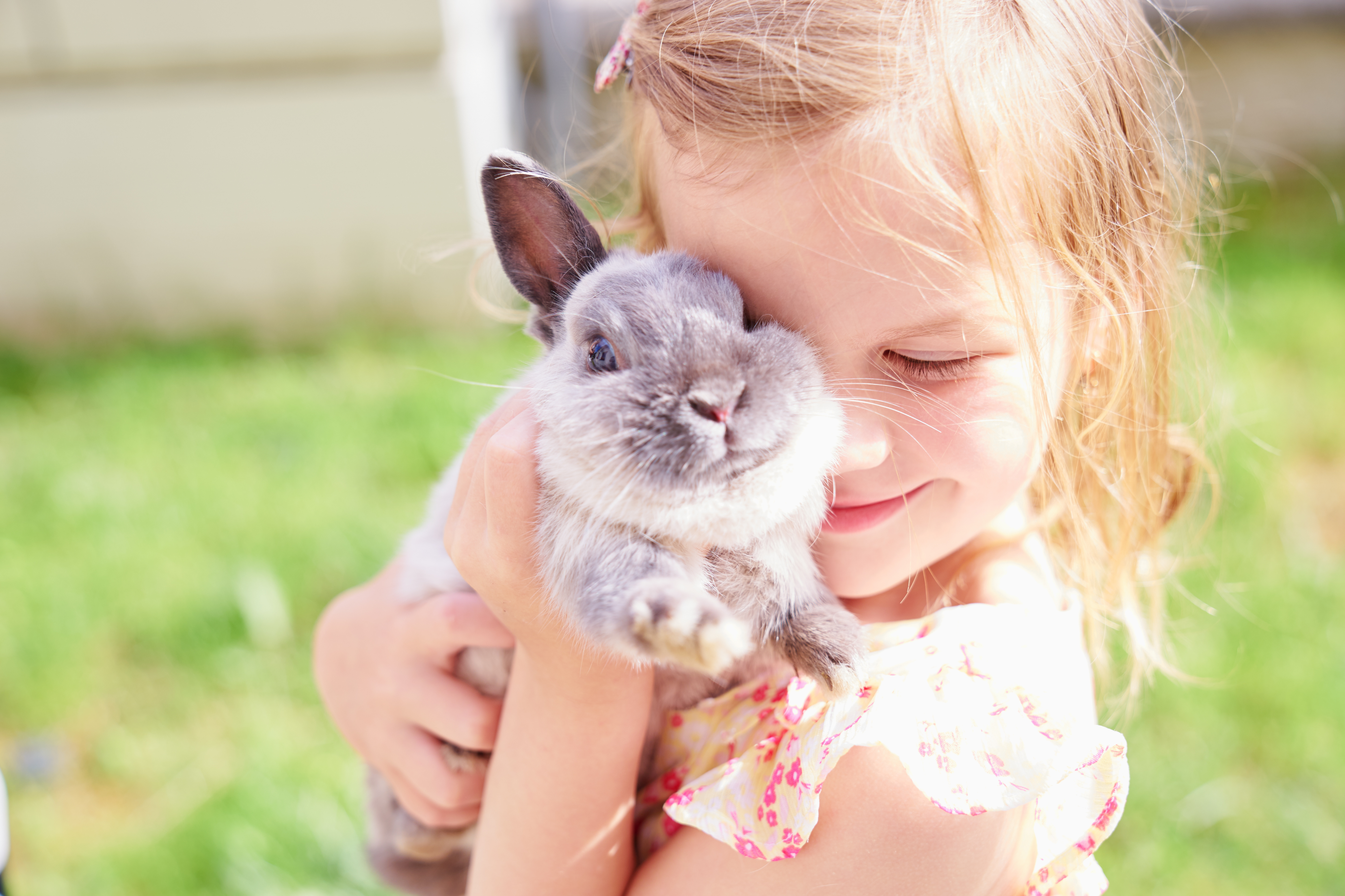 Don't Be a Silly Wabbit:The Ultimate Guide to Owning a Pet Bunny